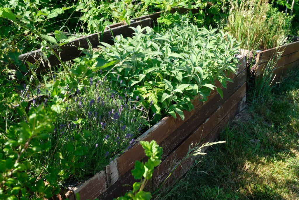 Gartenglück, Beet mit Salbei